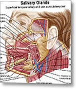 Anatomy Of Human Salivary Glands Metal Print