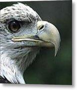 Aristocratic Bald Eagle Metal Print