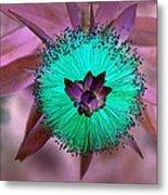 Artistic Bottle Brush Flower Metal Print