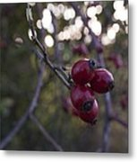 Autumn Berries Metal Print