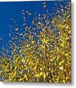 Autumn Blue Sky Metal Print