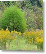 Autumn Grasslands 2013 Metal Print