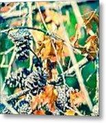 Autumn Leaves And Pinecone Background Metal Print