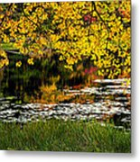 Autumn Pond 2013 Metal Print