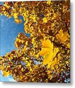 Autumn Splendor 9 Metal Print