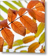 Autumn Upshot Metal Print
