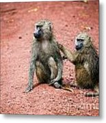 Baboons In African Bush Metal Print