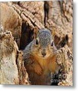 Baby Fox Squirrel Metal Print