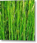 Bamboo Metal Print by Andres LaBrada