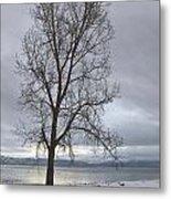 Bare Tree On A Wintery Tahoe Shoreline Metal Print