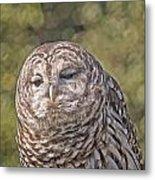 Barred Hoot Owl Photo Art Metal Print
