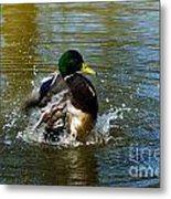 Bath Time  Metal Print