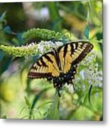 Beautiful Butterfly Pollination Metal Print