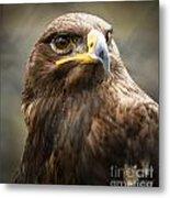 Beautiful Golden Eagle Portrait Metal Print