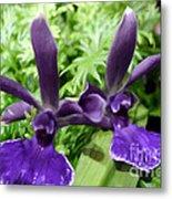 Beautiful Orchid Flower  Metal Print