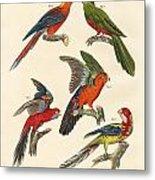 Beautiful Parrots Metal Print