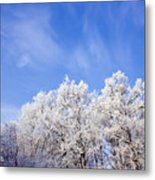 Beautiful Winter Landscape Metal Print