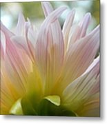 Beauty From Behind  Metal Print