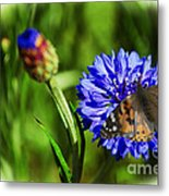 Beauty In The Eyes Of The Beholder Metal Print