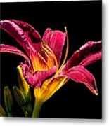 Beauty On The Black #5 Metal Print