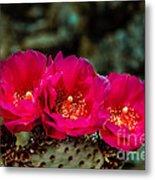 Beavertail Cactus Metal Print
