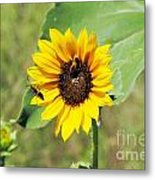 Bee Sunflower Metal Print