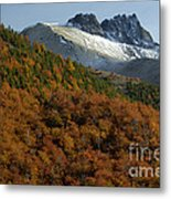 Beech Forest, Chile Metal Print