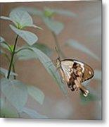 Beige On Beige Butterfly Metal Print