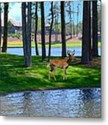 Big Canoe Buck Metal Print by Bob Jackson