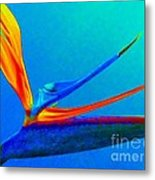 Bird Of Paradise With Blue Background Metal Print