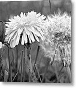 Birth Life Death Metal Print by Frozen in Time Fine Art Photography