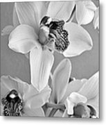 Black And White Beauty Metal Print