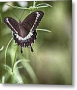 Black And White Butterfly V3 Metal Print