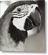 Black And White Parrot Beauty Metal Print