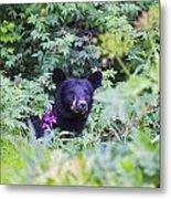 Black Bear Metal Print