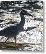 Black-crowned Night-heron Metal Print