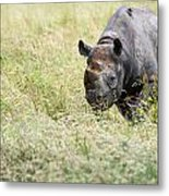Black Rhinoceros Diceros Bicornis Michaeli In Captivity Metal Print