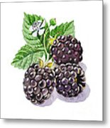 Artz Vitamins Series The Blackberries Metal Print