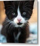 Black And White Kitten Metal Print