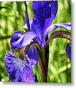 Blood Iris Metal Print