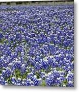 Blue Bonnet Carpet V7 Metal Print