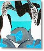 Blue Footed Boobies. Metal Print
