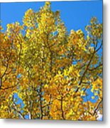 Blue Skies And Golden Aspen Trees Metal Print