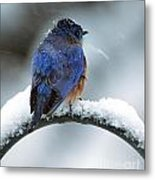 Bluebird In Snowstorm Metal Print