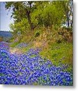Bluebonnet Meadow Metal Print
