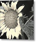 Blumen Metal Print