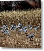 Bosque Del Apache New Mexico-sand Cranes V3 Metal Print