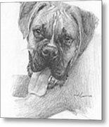 Boxer Dog Pencil Portrait Metal Print