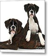 Boxer Pups Metal Print by Mark Taylor
