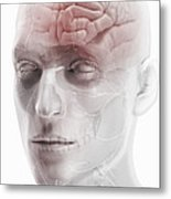 Brain And Nerves Of The Head Metal Print